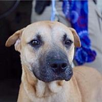 Adopt A Pet :: Tiger-URGENT - CRANSTON, RI