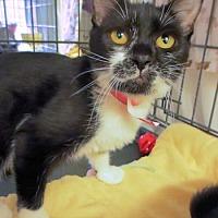 Adopt A Pet :: Lacy - Lunenburg, MA