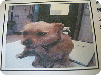 Terrier (Unknown Type, Small) Mix Dog for adoption in Las Vegas, Nevada - Candy