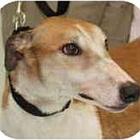 Adopt A Pet :: Thomas (Tom Lewis) - Louisville, KY