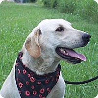 Adopt A Pet :: DUKE/Special Summer Pricing - Glastonbury, CT