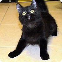 Adopt A Pet :: Merida - Orlando, FL