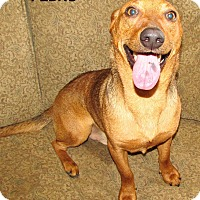 Adopt A Pet :: Pedro adoption pending - East Hartford, CT