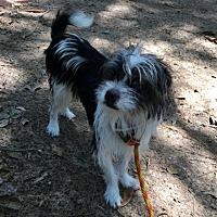 Adopt A Pet :: Perry - Spring, TX
