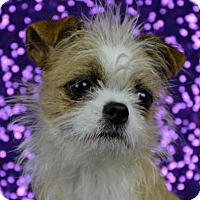 Adopt A Pet :: Romy - Abilene, TX