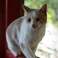 Adopt A Pet :: Buff - Dahlonega, GA