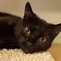 Adopt A Pet :: Spring - Grayslake, IL
