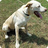 Adopt A Pet :: Noah - Somers, CT
