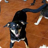 Adopt A Pet :: Batania - Osseo, MN