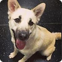 Adopt A Pet :: Jill - Mt. Clemens, MI