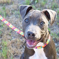 Adopt A Pet :: Charlotte - College Station, TX