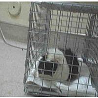 Adopt A Pet :: *Urgent* Juneau - Fullerton, CA