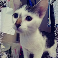 Adopt A Pet :: Mary Kay - Trevose, PA