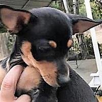 Adopt A Pet :: Maxamillion - Salt Lake City, UT
