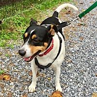 Adopt A Pet :: Oscar - West Grove, PA