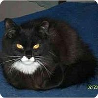 Adopt A Pet :: Sable - Riverside, RI