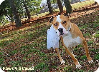 Pit Bull Terrier Mix Dog for adoption in Paducah, Kentucky - Oscar