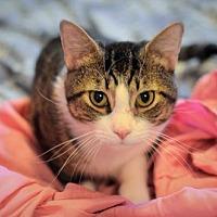 Adopt A Pet :: Handsome (& Chessie) - Herndon, VA