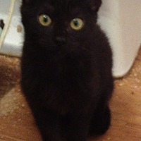 Adopt A Pet :: Marissa - Houston, TX