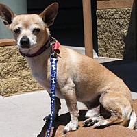 Adopt A Pet :: Caesar - Gilbert, AZ