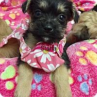 Adopt A Pet :: Starla - Brea, CA