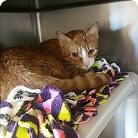 Adopt A Pet :: Sushi - Chippewa Falls, WI
