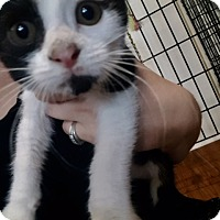 Adopt A Pet :: Luke - Ashland, OH