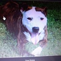 Adopt A Pet :: ACE - Greeneville, TN