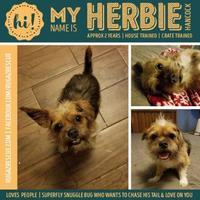 Adopt A Pet :: Herbie - New Port Richey, FL