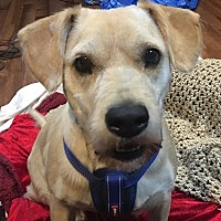 Adopt A Pet :: Rue - San Diego, CA