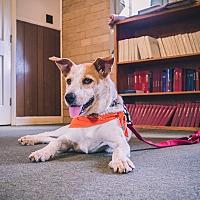 Adopt A Pet :: Cooper - Indian Trail, NC