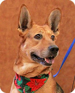 Shepherd (Unknown Type)/German Shepherd Dog Mix Dog for adoption in New Rochelle Humane, New York - Harriet