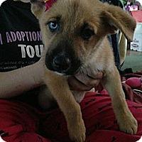 Adopt A Pet :: Blue Eyed Girl - Fowler, CA