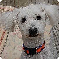 Adopt A Pet :: Westly - Tucson, AZ