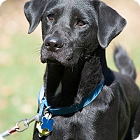 Adopt A Pet :: Ivanka - Salem, MA