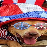 Adopt A Pet :: Dillo - Toledo, OH