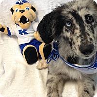 Adopt A Pet :: Oreo - Hazard, KY