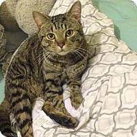 Adopt A Pet :: Pepsi - Merrifield, VA