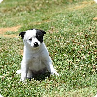 Adopt A Pet :: kimberly - South Dennis, MA