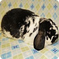 Adopt A Pet :: Vago - Chesterfield, MO