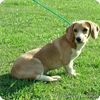 Adopt A Pet :: KIMMIE - parissipany, NJ