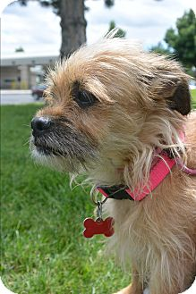 Mixed Breed (Small) Mix Dog for adoption in Meridian, Idaho - Sweetie