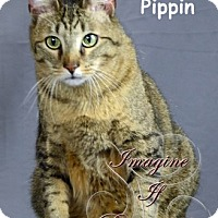 Adopt A Pet :: Andrew / Pippin - Oklahoma City, OK