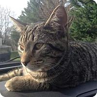 Adopt A Pet :: Zander (COURTSEY POST) - Baltimore, MD