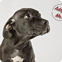 Adopt A Pet :: Mac - Gillsville, GA