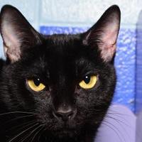 Adopt A Pet :: Dakota - Elkhorn, WI