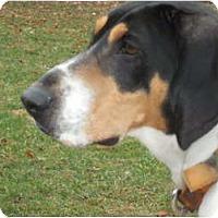 Adopt A Pet :: Dixie - Morris, PA