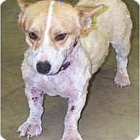 Adopt A Pet :: Shorty - Inola, OK