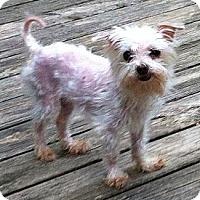 Adopt A Pet :: *Maggie May - PENDING - Westport, CT