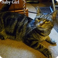 Adopt A Pet :: Baby Girl - Bentonville, AR